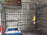 寵物籠子,貓籠狗籠,送貓砂盆貓碗