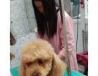 保山宠物医院用我们的专业让您的狗狗陪你走下去