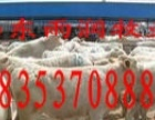 长期批发直销多个品种肉牛犊三包服务