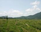 海棠湾镇 海棠湾东线高速路出口处 瓜菜土地 100000