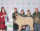 专业全犬种训练寄养黑龙江神州竞技犬俱乐部