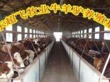 淄博鲁西黄牛小牛犊价格