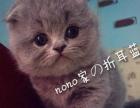 蔓蔓の猫:蓝猫 蓝猫 蓝猫 出窝咯