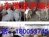 咸宁鲁西黄牛养殖价格 鲁西黄牛养殖利润分析