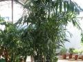 园林景观,园林设计,绿植租赁,送货上门,养护铺草坪
