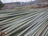 石景山楊木桿電力木桿廠家的地址在哪