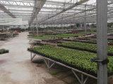 实用的温室大棚推荐 无土栽培温室大棚