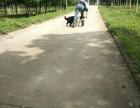 武汉宠物训练提供全方位在线训狗服务