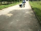 如何训练狗狗握手 仅需几个小步骤 轻松教出好狗狗