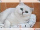 汕头哪里有卖渐层猫多少钱一只可签订协议保证健康纯种已驱虫