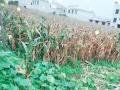夏云镇农贸市场附近 土地 488.6平米