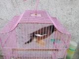 玩赏鸟价格1000