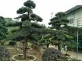 大型花场,绿植租摆,园林绿化,各种盆栽花卉