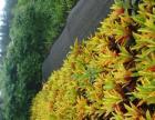 承接工程绿化、苗木;乔木;地被;草坪;绿化