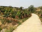 仁和福田镇20亩芒果林带鱼塘、稻田、房屋出租