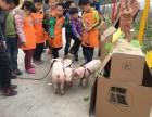 三只小猪农场里的故事植树造林DIY丹阳肉燕亲子风车嘉年华一日