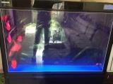 出售1.5米下滤鱼缸及鹦鹉