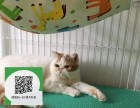 柳州哪里有宠物店 柳州哪里卖宠物猫便宜 柳州加菲猫价格
