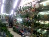 供应各种观赏鱼各种热带鱼盆栽盆景绿萝吊兰南宁友爱路花卉水族店