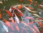 水族之家 观赏鱼租摆 鱼缸消毒 鱼缸定做搬运等