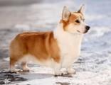 武汉最大宠物养殖基地常年出售各种精品宠物幼犬