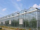 寿光鸿盛/温室建造/生产厂家/高端温室/大棚种植/蔬菜种植
