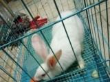 兔子名字叫乐乐