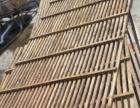 高价收鸽子,白鸽只120收。和平超便宜出木条