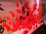 杭州卖观赏鱼