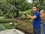 深汕合作区捕蛇抓蛇公司找春华 蛇类防治专家