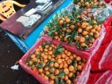 广州江南水果批发市场代销