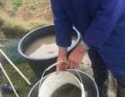 较好的生态甲鱼就在长阳山野水寨