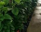 海口市鲜花店/开业花篮配送/预订外送鲜花