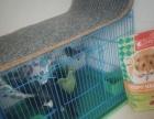 自己家的松鼠