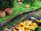 苏州全能通食品运输服务