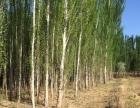 吐鲁番市胜金乡出售宝地 厂房 4200平米