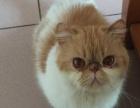 加菲爱猫人带走!!
