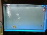 森森鱼缸干湿分离