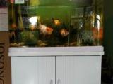 鱼缸转让 温岭