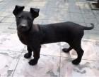 成都繁殖基地出售大中小型宠物犬,正规专业,品种齐全