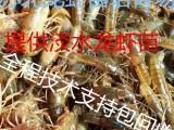 沭阳龙虾苗价格沭阳哪里有龙虾苗沭阳哪家虾苗场正规