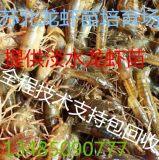 稻田如何养殖小龙虾稻虾共养池塘建设稻田养殖小龙虾成本
