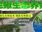 银龄富民10号泥鳅养殖:一条不错的致富路