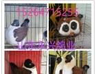 漯河鸽子养殖基地
