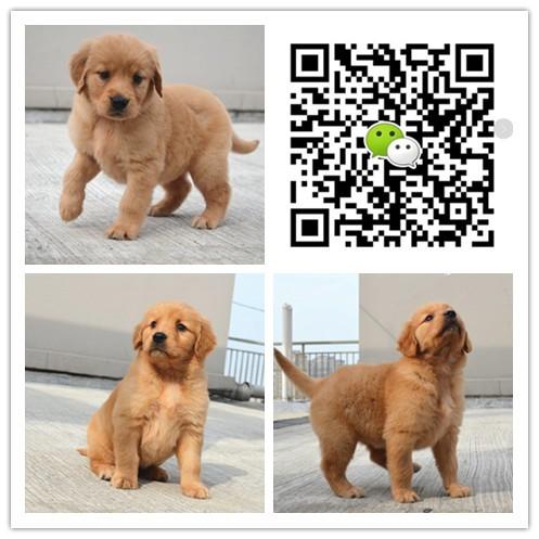 养殖场出售各类名犬 品种齐全 售后有保障 支持全国发货