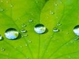 您的面料要做到什么样的防水效果答案荷叶效应