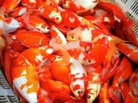北京小冯渔场双十一买鱼狂欢节