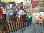 呆萌羊驼出租当车模上海启欣展览展示有限公司