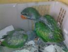 大型人〗工繁殖大绯胸鹦鹉,葵花鹦鹉,亚马逊鹦一��月之后鹉,灰机幼崽