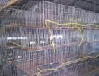 出售鸽子兔子豚鼠等宠物以及各种笼具兽用饲料药品